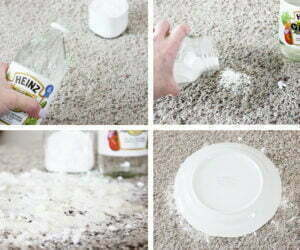 removing-pet-stains-7